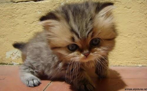Belles Photos de chatons, bébés chat