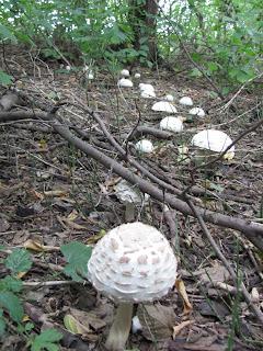 грибная дорожка, осенний лес, грибы