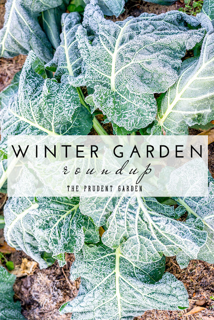 http://theprudentgarden.com/winter-garden-roundup/