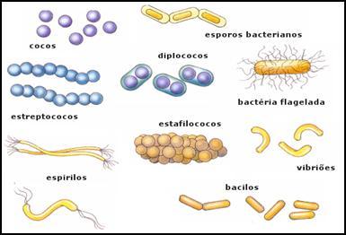 las bacterias tipos: