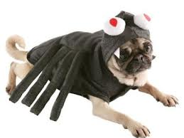 Safe Halloween Costumes for Pets