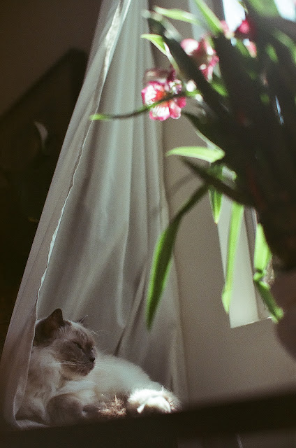 California Wedding and Event Photography