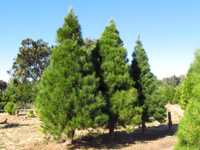 Field Trip Friday: The Christmas Tree Train - GoExploreNature.com