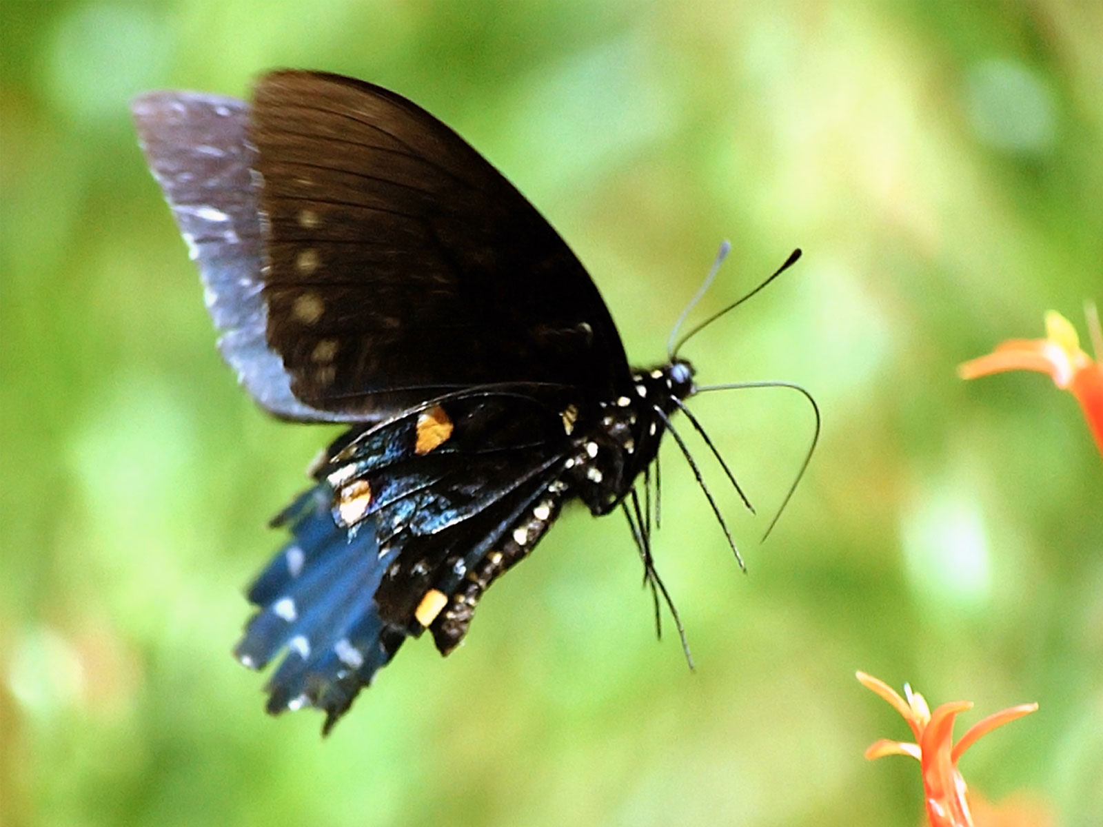 Butterfly Pictures And Explanations on Color Life Cycle 5