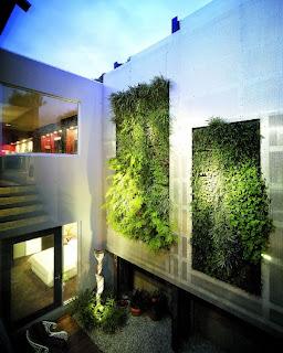 Membuat Vertical Garden Di Rumah