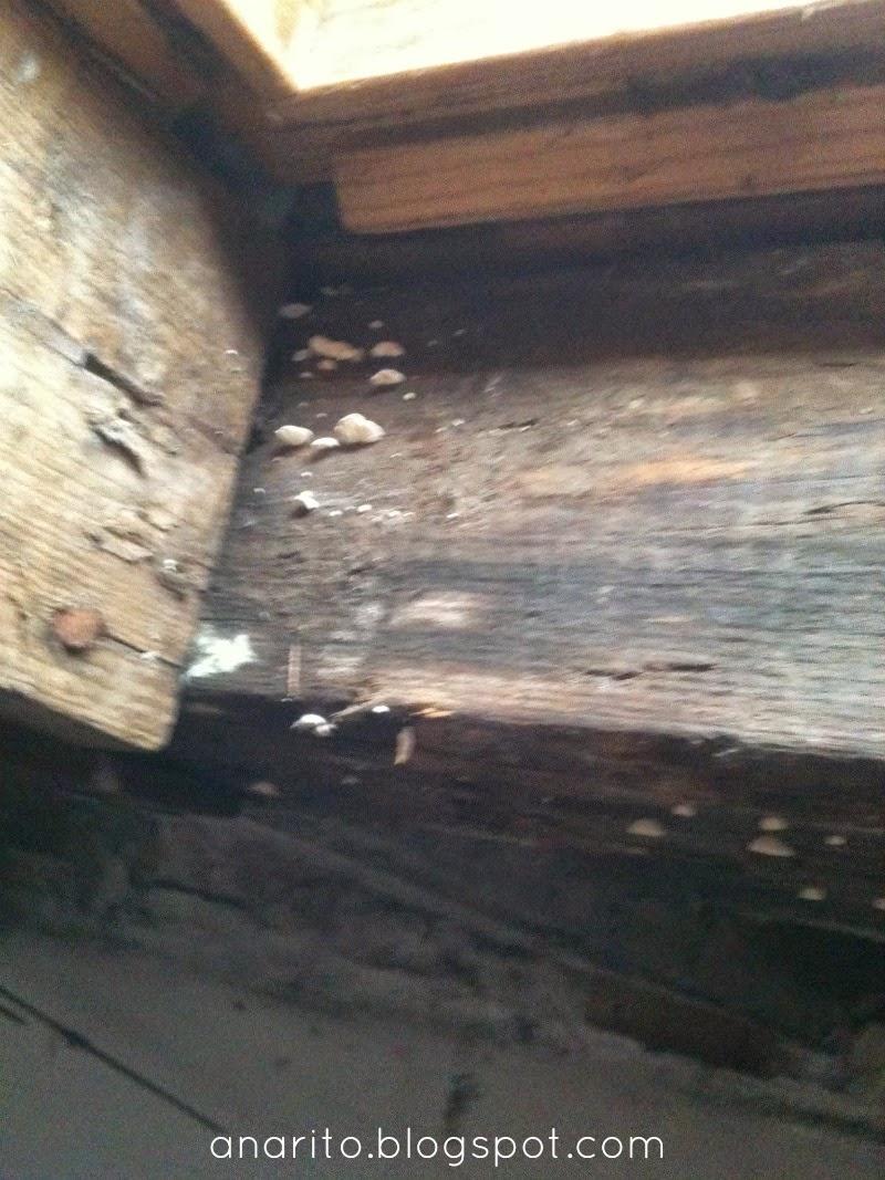 Janela do sótão com cogumelos