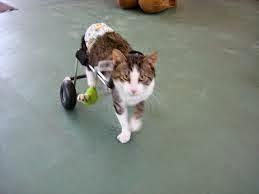 Proyecto gato masque4patas com carritos para perros y gatos for Carritos para perros