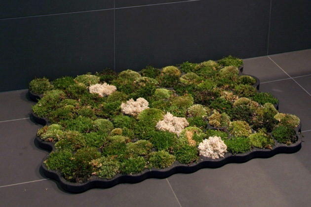 Moss Carpet by Nguyen La Chanh