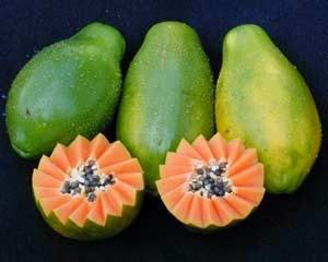 Rico mamão papaia
