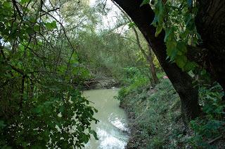 Vegetación en la ribera (noviembre 2009)