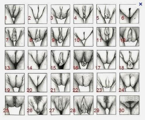 Conoce los diferentes tipos de vagina EN PAREJA Salud