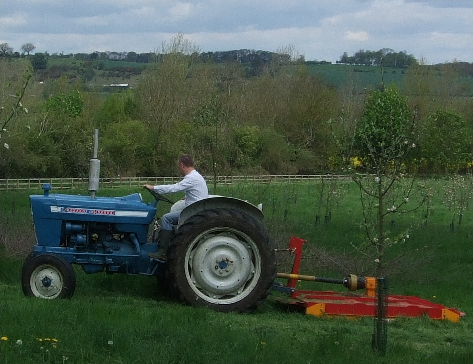 Ford Orchard Tractor : The little orchard company heggarty ford tractor