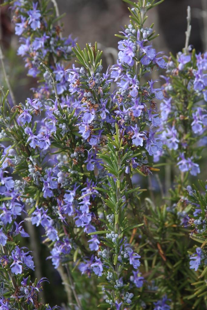 Flora Wonder Blog The Rhododendron Species Garden