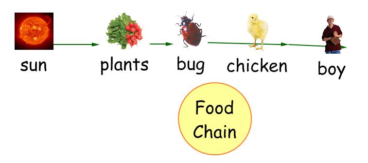 Technology Gattis Food Chain In Kidspiration