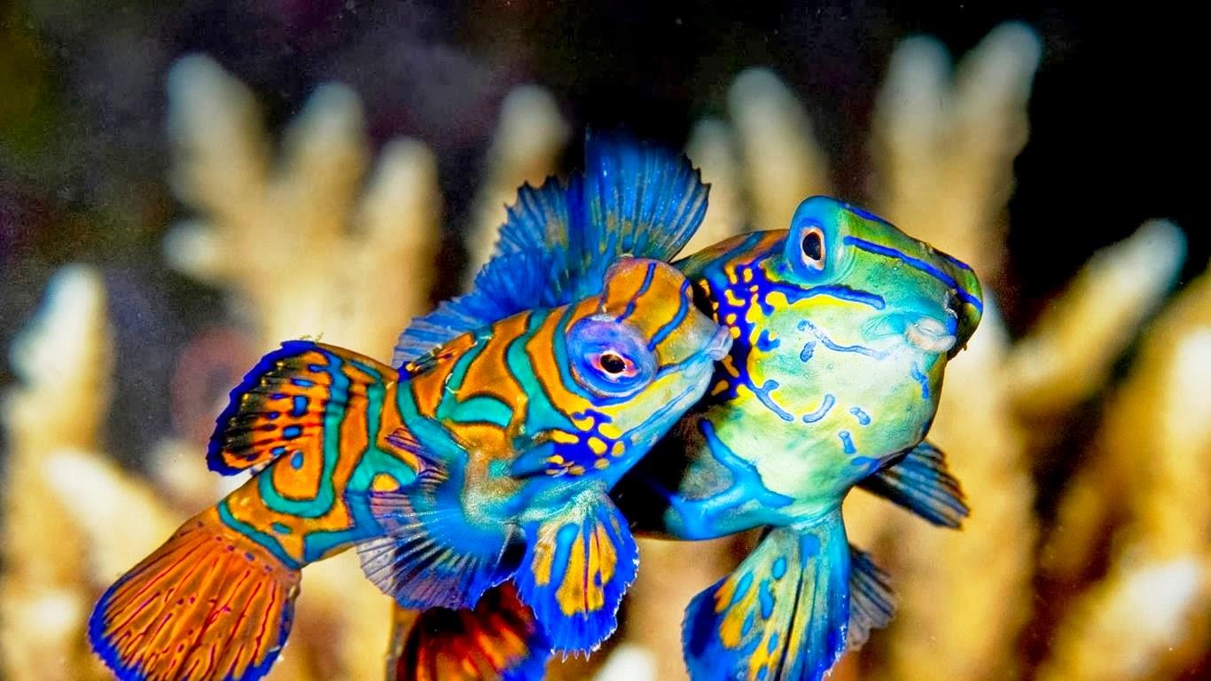 Indahnya Wisata Alam Taman laut Bunaken