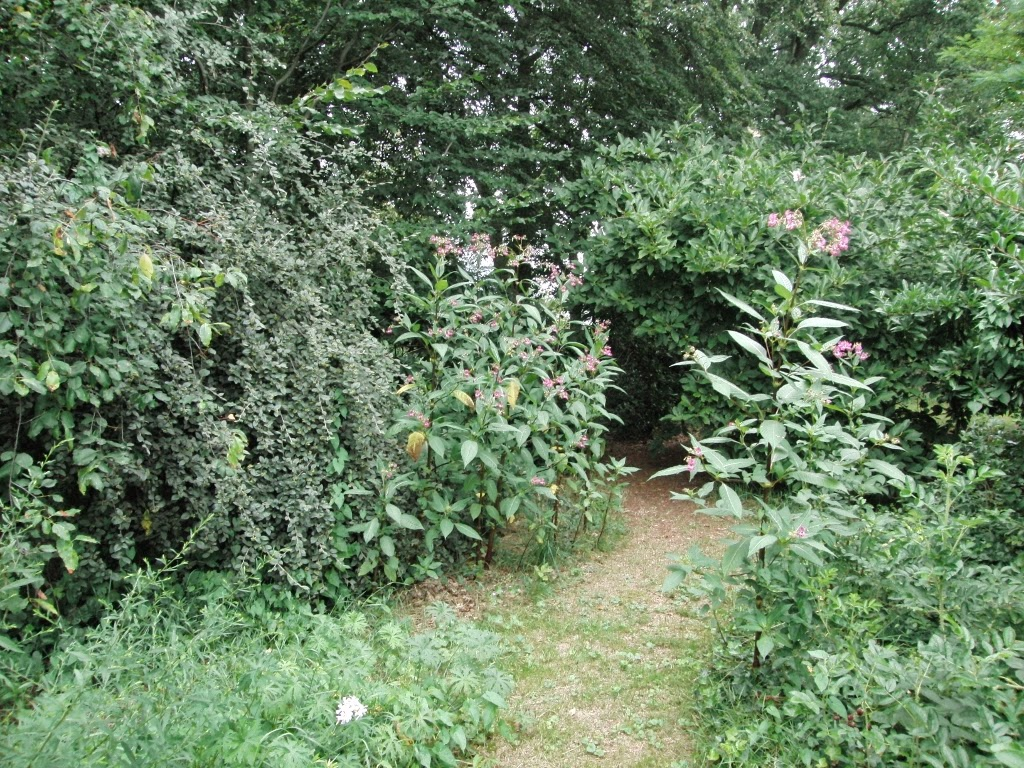 voedselbos, food forest,