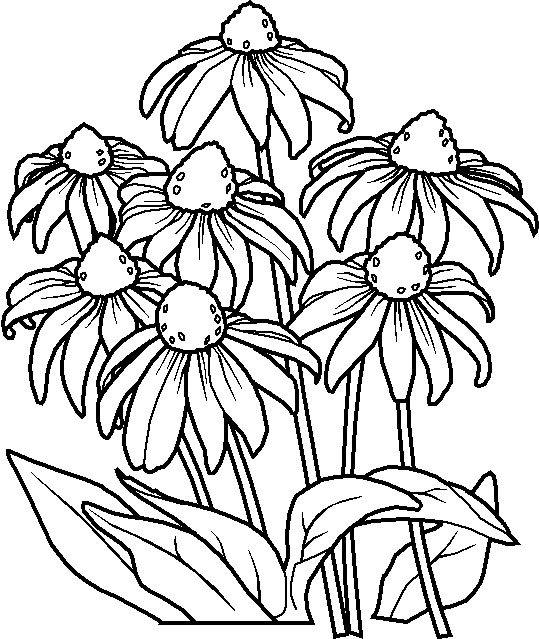 flower coloring in pages - photo#22
