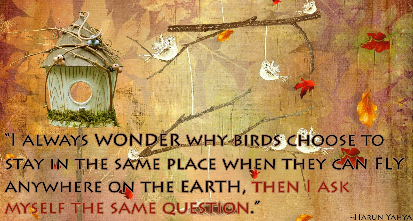 quotes about freedom, quotes about flying, quotes about birds, I always wonder why birds, quotes about travelling