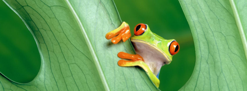Frog facebook cover