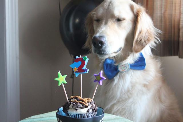 birthday dog making wish with eyes closed
