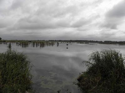 Michigan DNR improving waterfowl habitat at Crow Island State Game Area