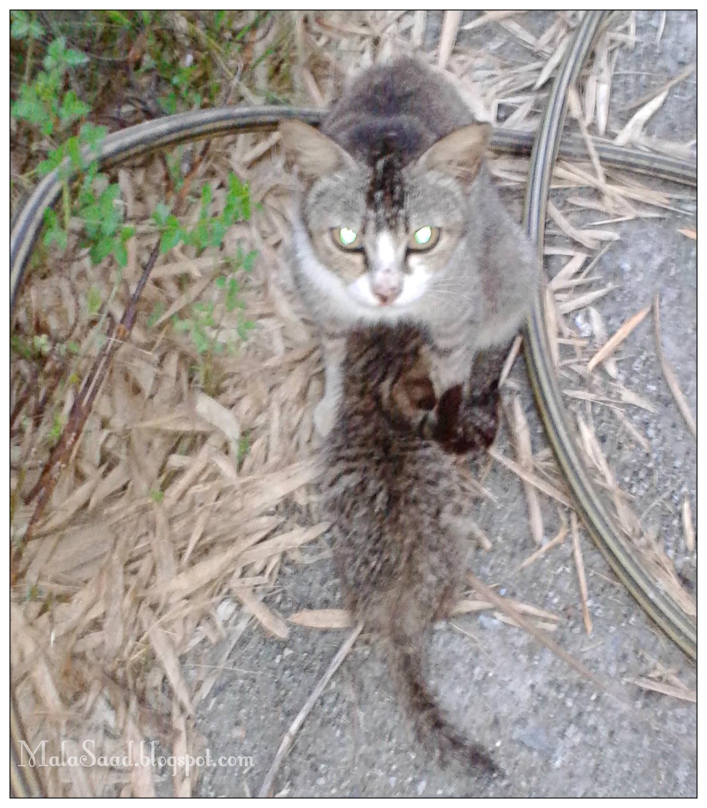 My Green Eye S Galak Kucing Doa Dan Penyembuhan Yang