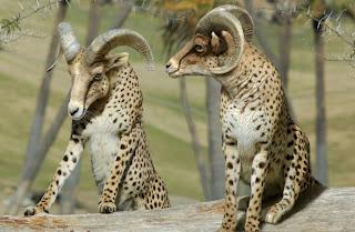 Imagenes Graciosas de Animales, Tigres