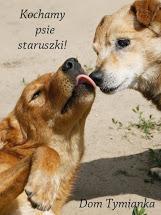 Tam kochają psie staruszki,