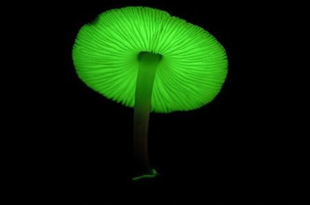 Most Amazing Mushrooms On Earth
