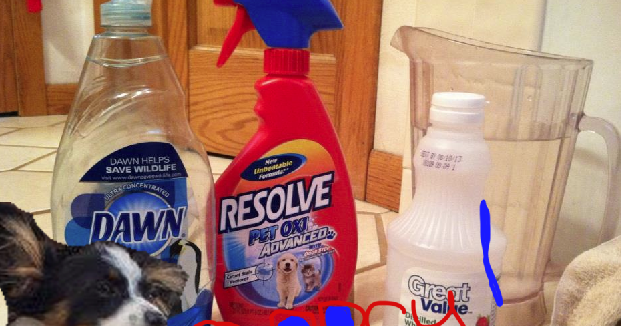 How To Quick Pet Stain Cleaner Faris Jaclyn I Littlest