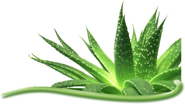 bahan alami untuk kulit sehat