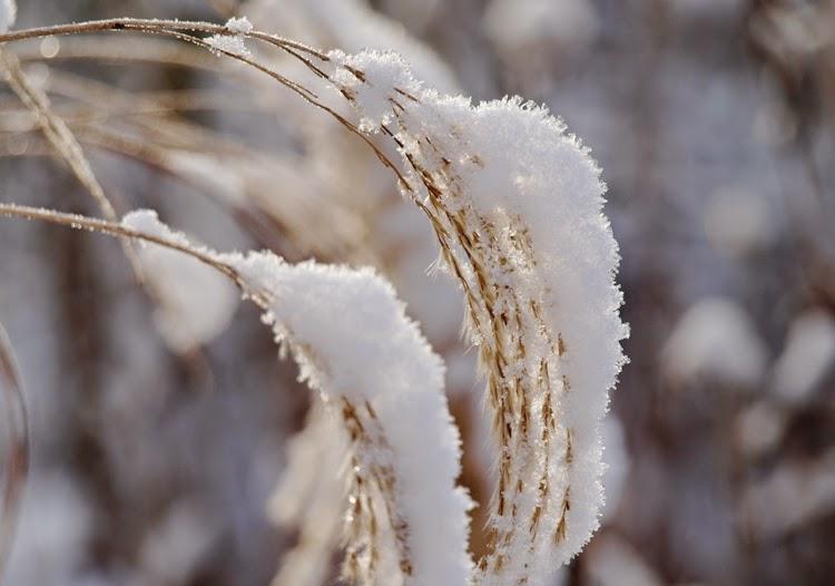 Skab oplevelser i haven om vinteren ved hjælp af græsser