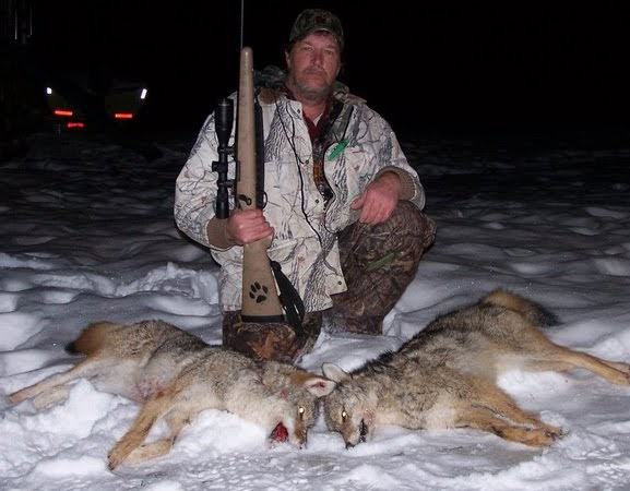 Foremost Coyote Hunting: Howling Up Coyotes