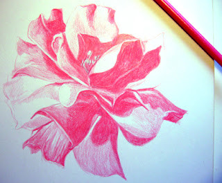 Second photo of a Work in Progress - Color Pencil Drawing of a Pink Rose