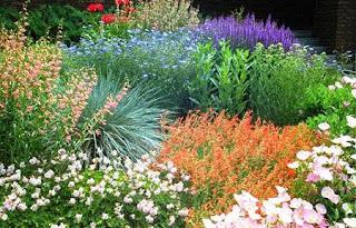 Dise o de jardines xerojardineria y plantas crasas for Jardines que necesitan poca agua