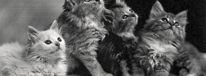 Couverture pour journal facebook de chats