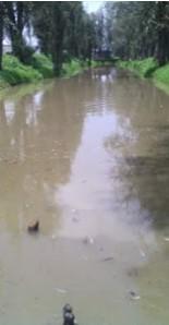 Ecocidio en zona chinampera de Tláhuac, afectados culpan al Sacmex