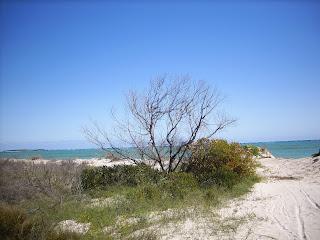 Cervantes, Western Australia - own image