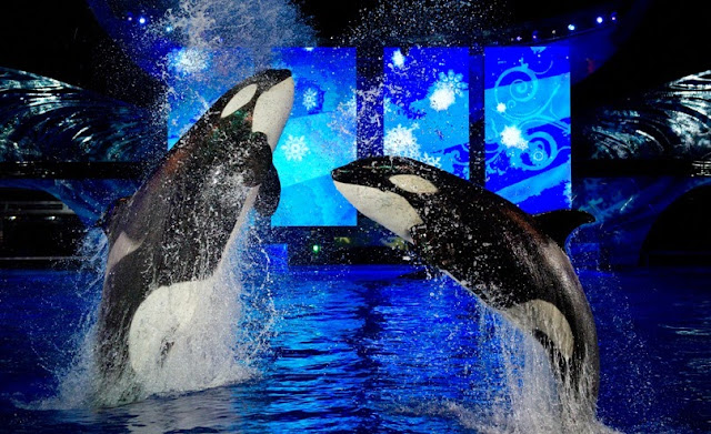 Natal Reveillon Orlando SeaWorld