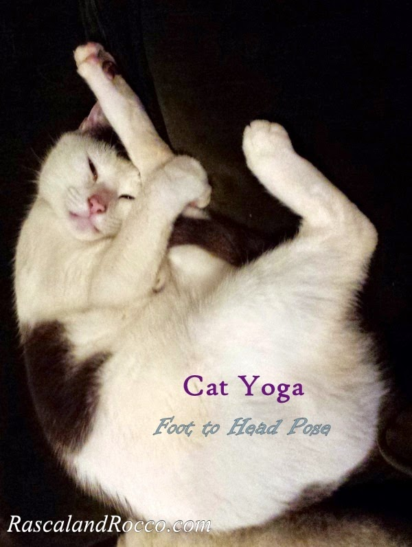 Healthy Lifestyle Tips from a Yogi Cat #PawNatural #naturalcatfood #cathealth