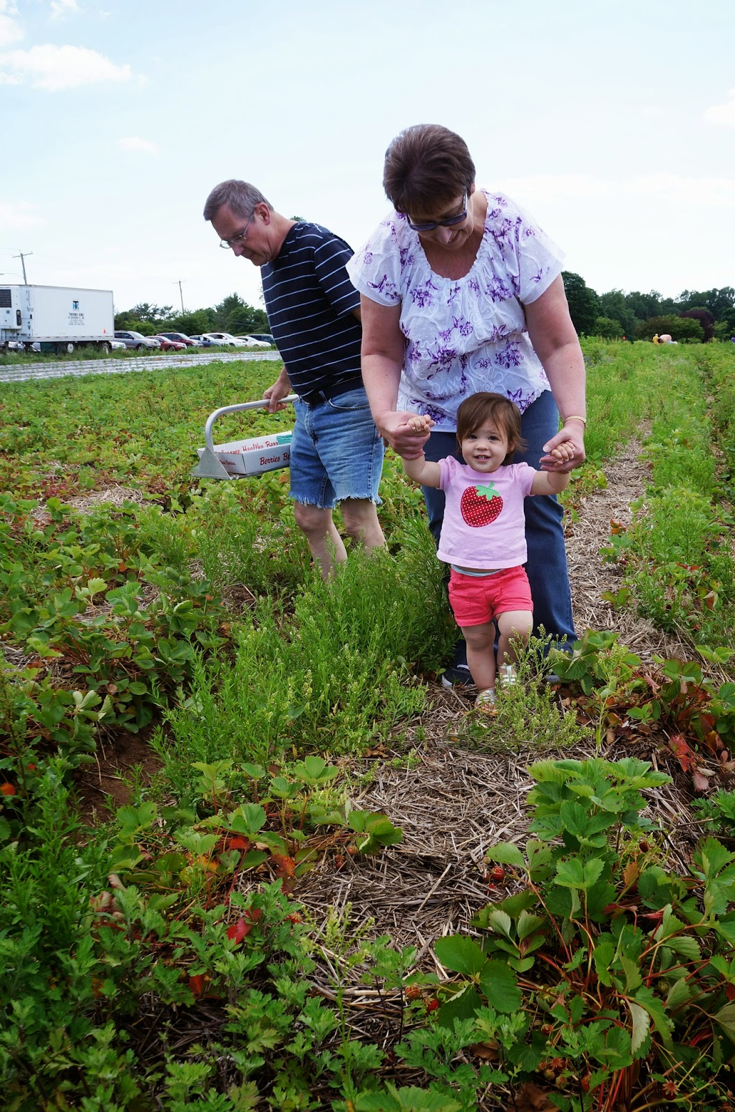 Strawberry Picking! hellokelcey.blogspot.com