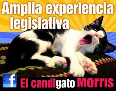 gato-candidato-politico: candigato