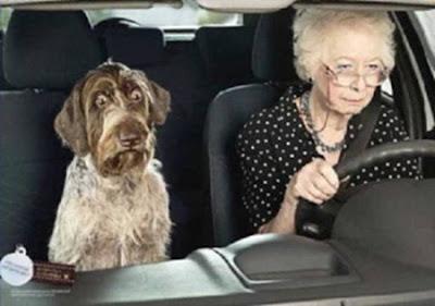 foto mostra cachorro com olhar assustado.