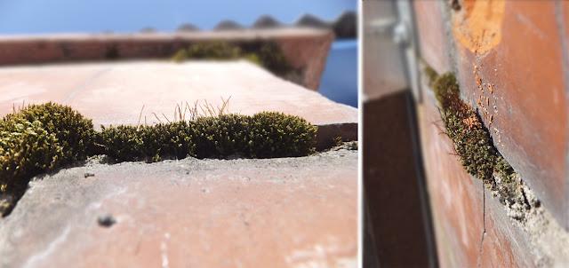 Весна - мох на кирпичах