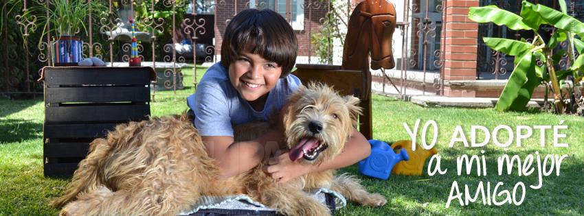 Adopcion de perros Puebla FUPA