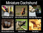 Mini Dachsies