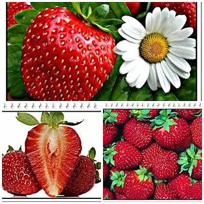 Benefits strawberries for human health and beauty