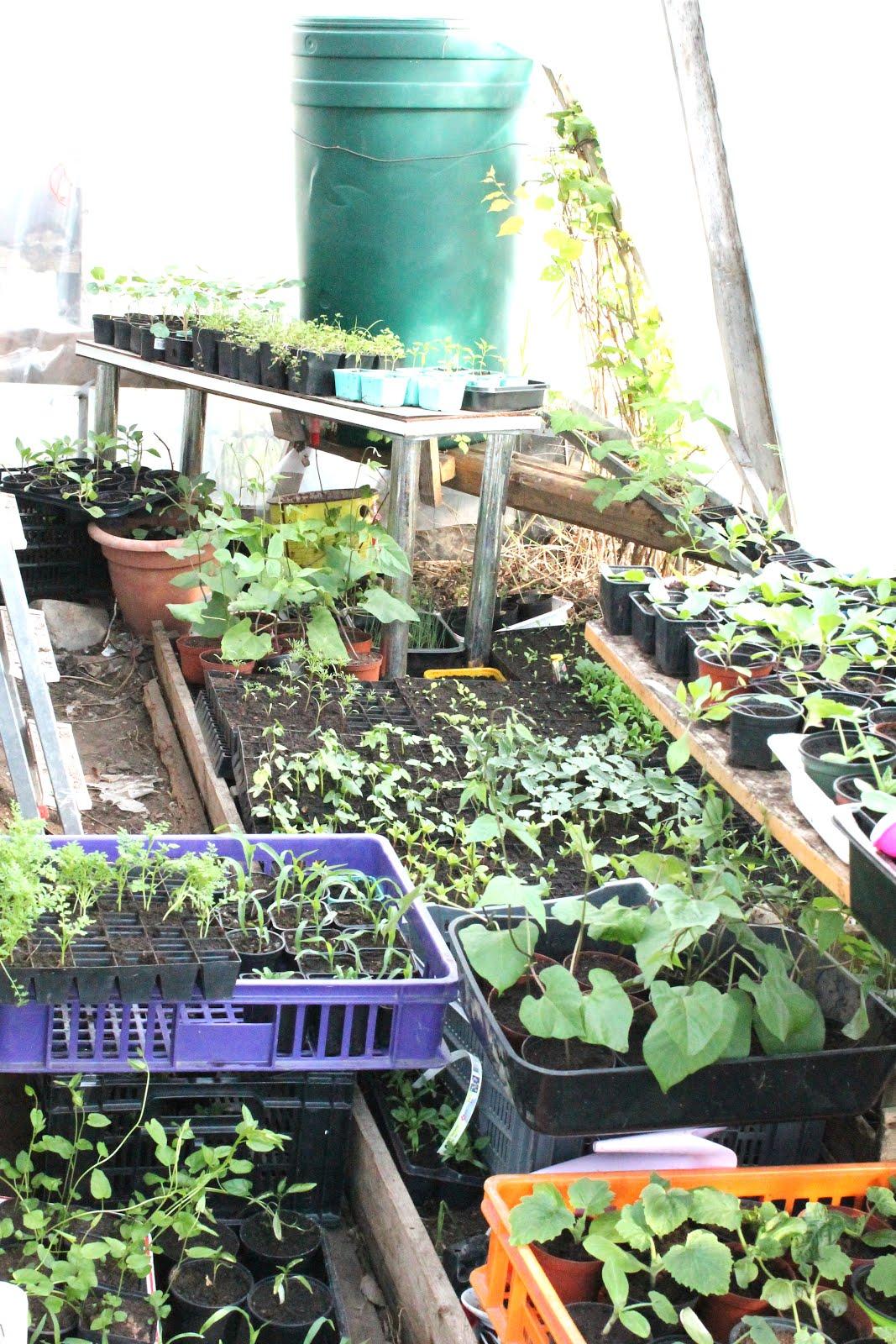 Kasvihuone-elämää