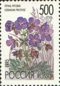 1995 Geranium Pratense - Russia, Пеларгония