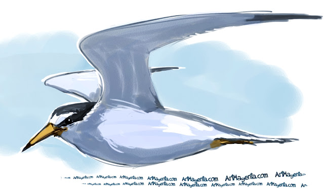 Least Tern sketch painting. Bird art drawing by illustrator Artmagenta